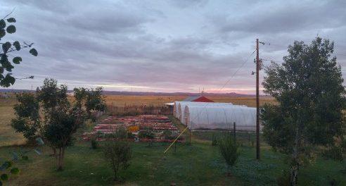 windy mesa farm