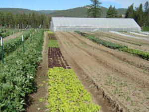 certified organic diversified farm