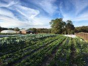 Little Pond Farm