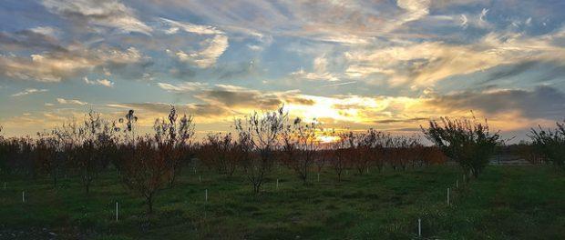 Soil Born Farms