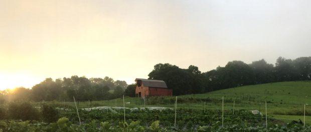 farm and fiddle