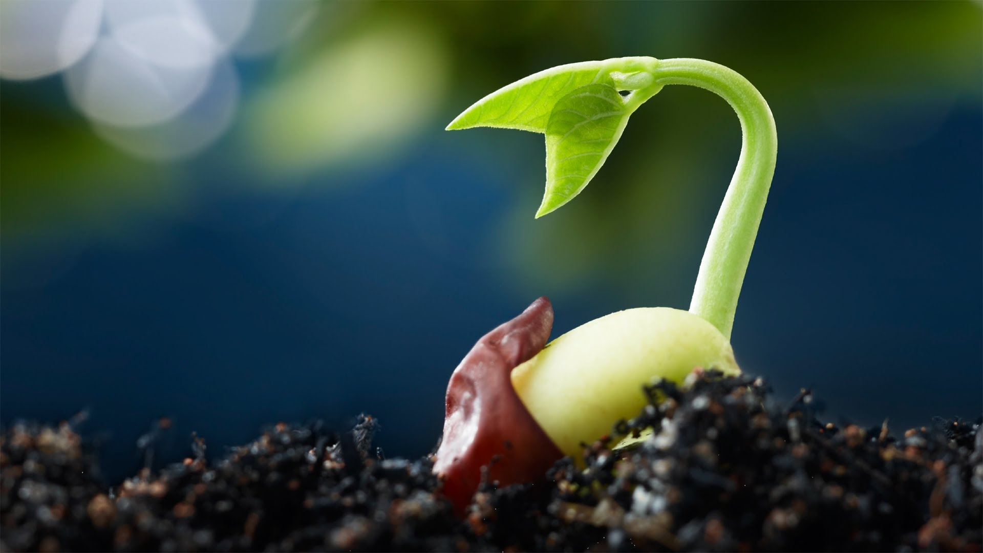 public plant breeding