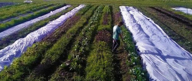 sound vegetables