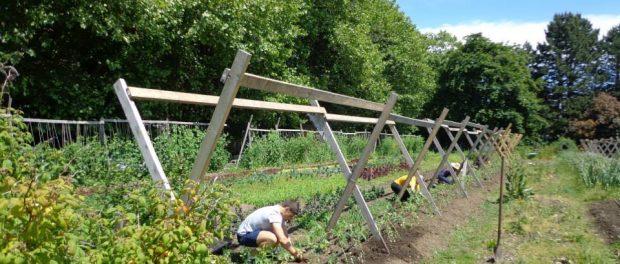 farm practicum