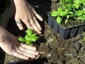 Exploring the Small Farm Dream