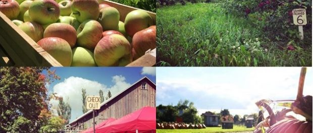 Wisconsin Orchard