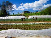 way of life farm