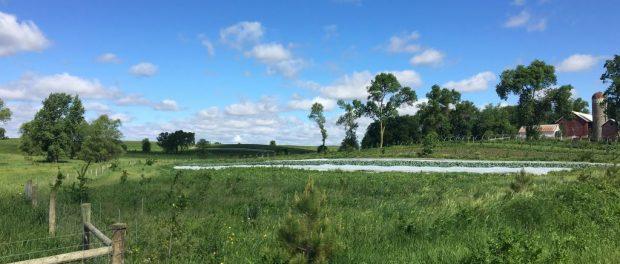 Organic Farm Jobs in Minnesota