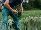 organic farming internships in Michigan