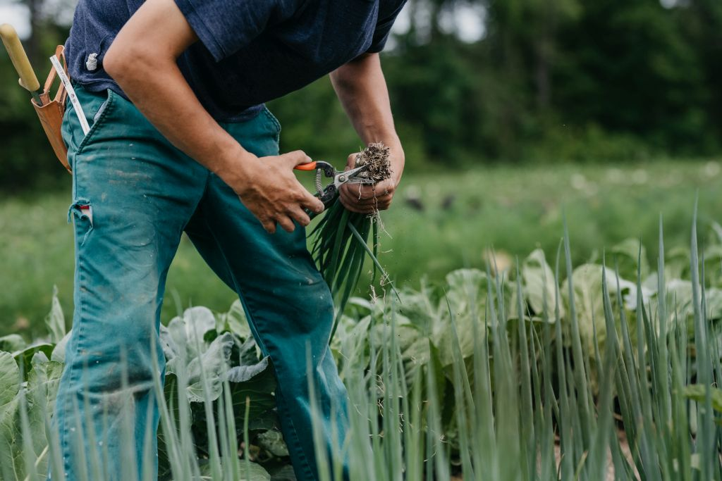 organic farming internships in Michigan