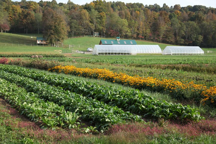 vegetable grower