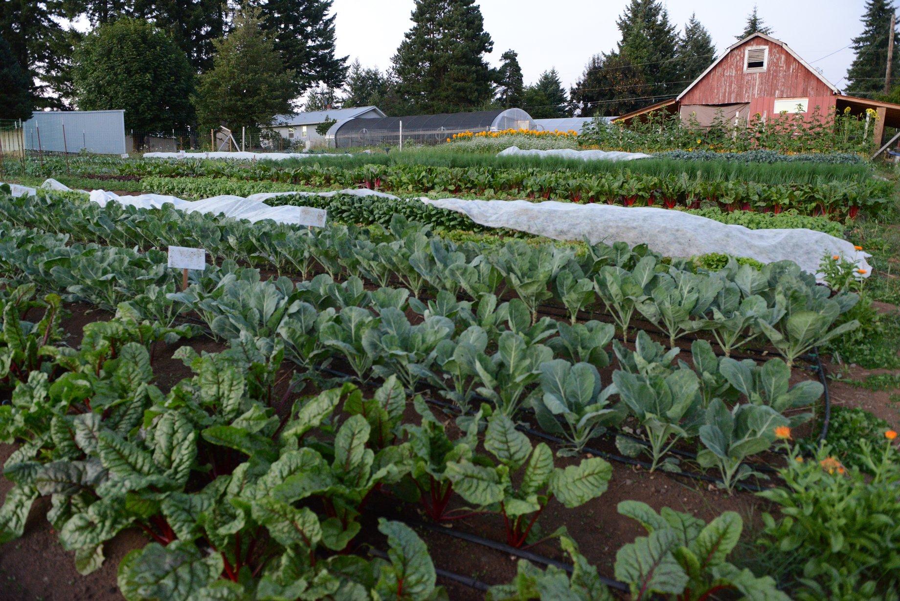 biodynamic farm apprenticeship