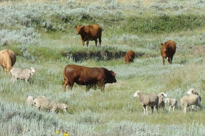 Barthelmess Ranch