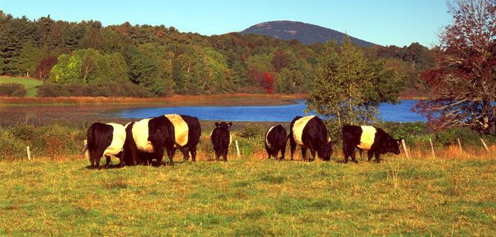 Livestock Apprenticeship