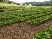 organic farm apprenticeship and internship