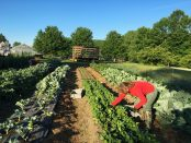 Red Shirt Farm