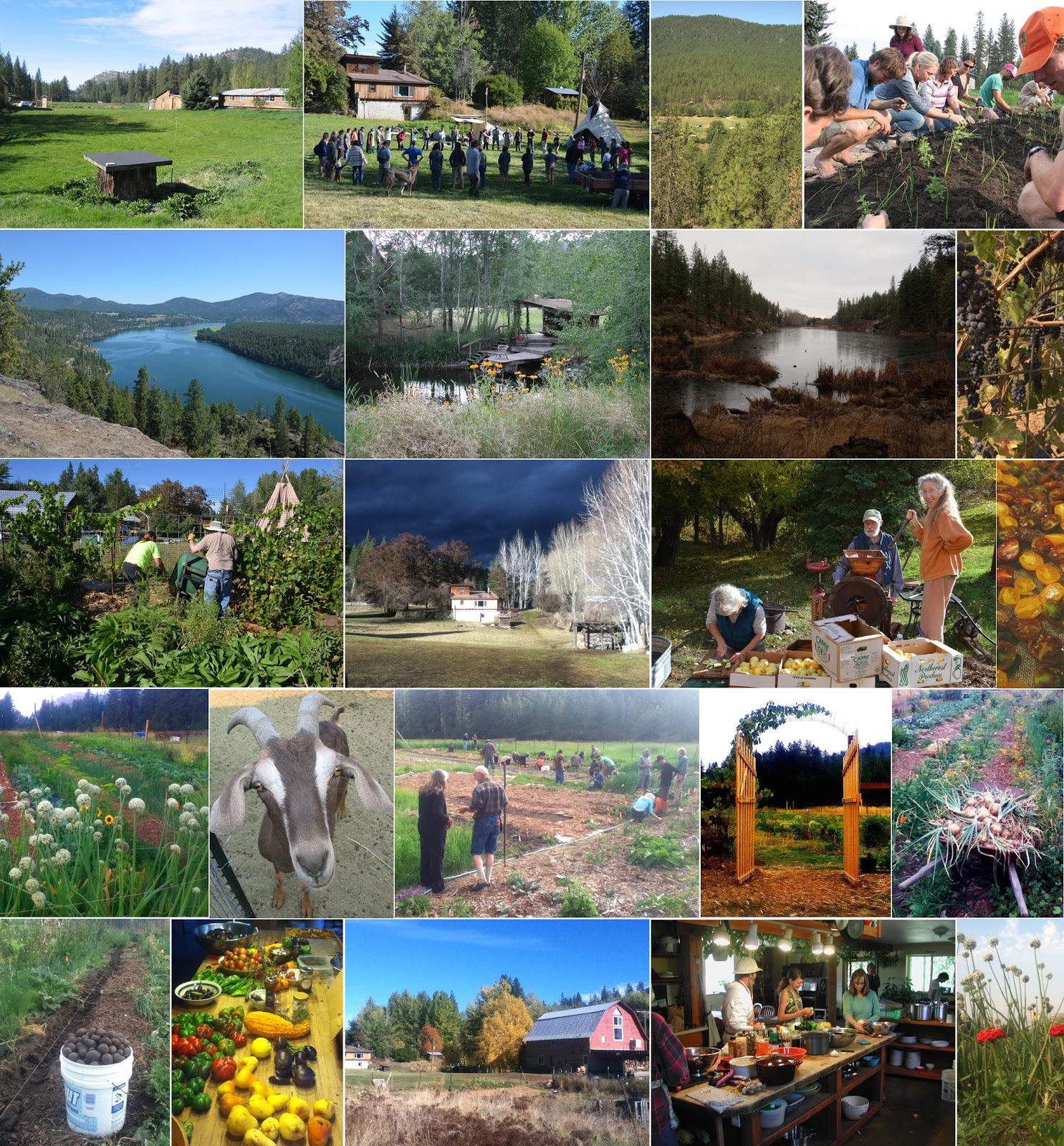 Washington Permaculture